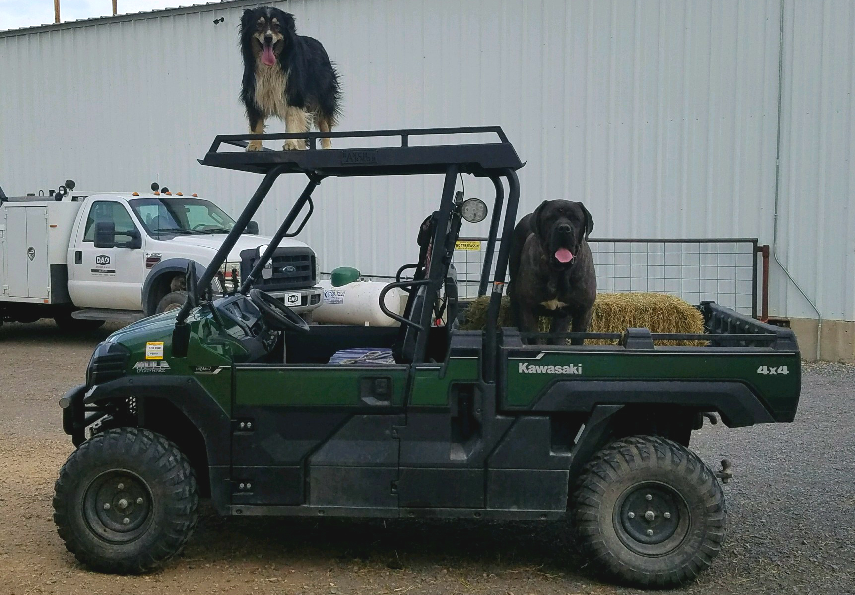 kawasaki-mule-pro-fx-metal-roof-with-dogs-on-it.jpg
